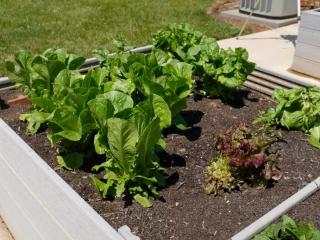 Garden Therapy